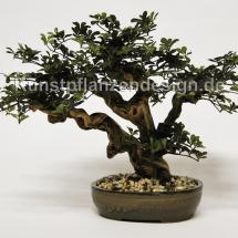 002_limonen-bonsai