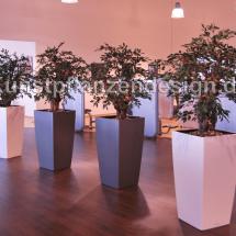 004_bonsaibaeume_im_hochgefaeß_h_200cm