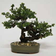 001_ming-fern-bonsai