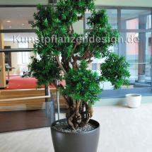 005_podocarpus-kugelbonsaibaum_250cm